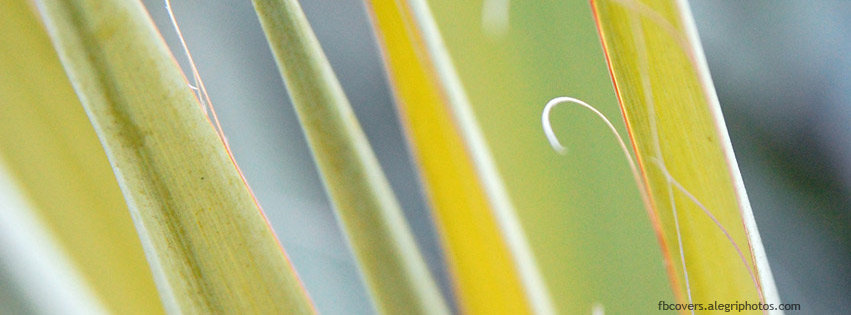 Agave leafs detail Facebook cover photo