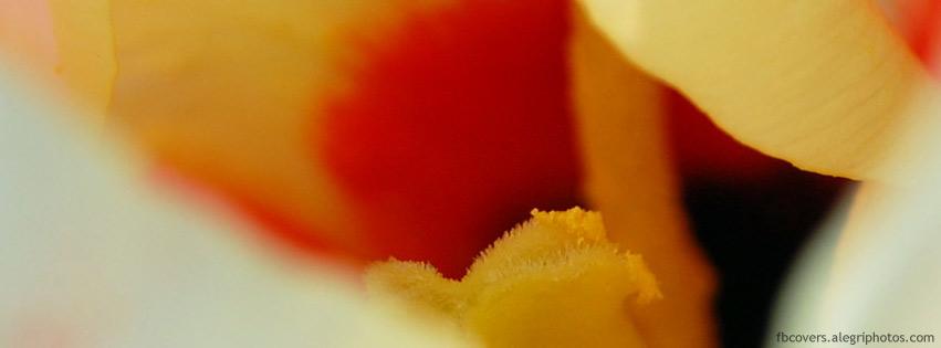 اغلفة فيسبوك زهور صفراء 2012,