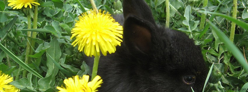 Black rabbit Facebook cover photo