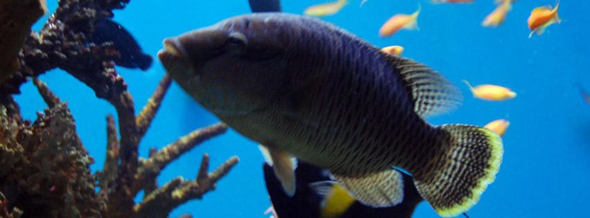 اغلفة فيسبوك اسماك البحر 2012,
