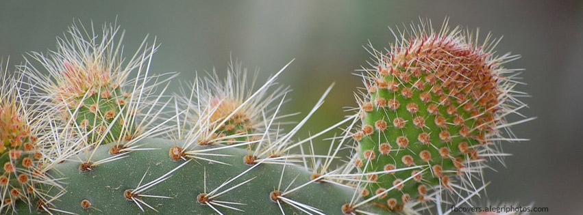 Cactus plants Facebook cover photo
