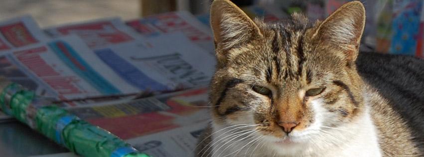 اغلفة فيسبوك حيوانات 2012, غلافات