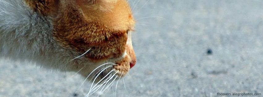 Curious cat facebook cover image