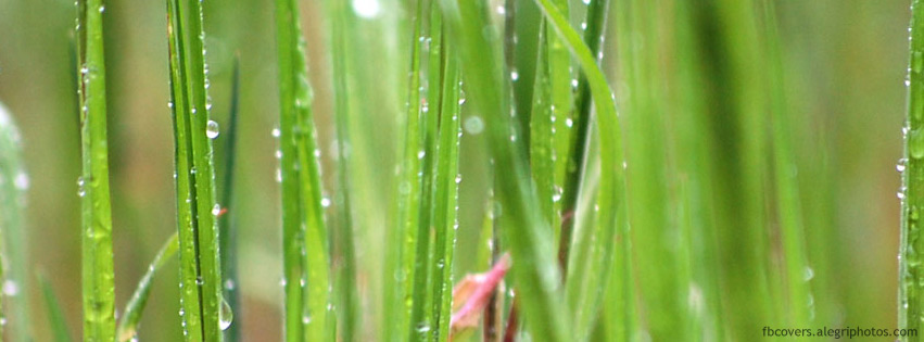 Grass macro with dew drops Facebook cover photo