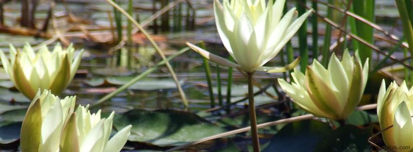 اغلفة فيسبوك زهور بيضاء 2012,
