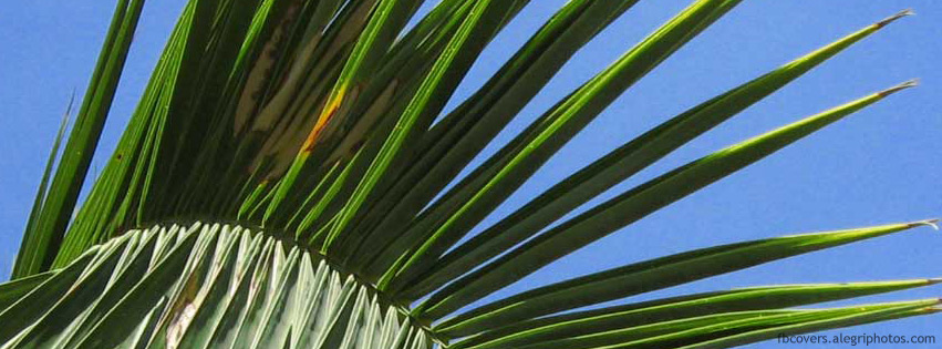 Palm tree leaf with sky in back Facebook cover photo