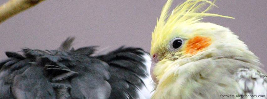 اغلفة فيسبوك طيور ملونه 2012,