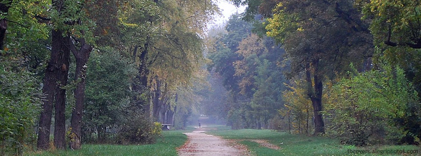 Road in forest during autumn Facebook cover photo
