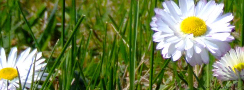 Small white flowers in green grass Facebook cover photo