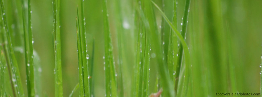 Tall grass after rain Facebook cover photo
