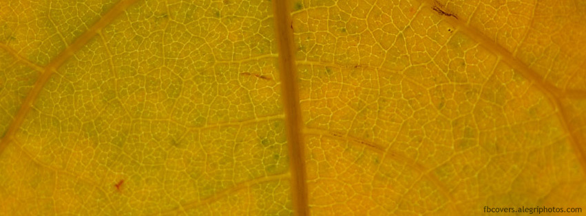 Transparent leaf with backlight Facebook cover photo